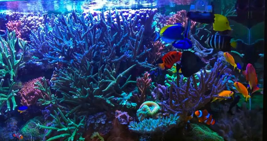 Meerwasseraquarium f ttern von getrockneten algen for Algen im aquarium