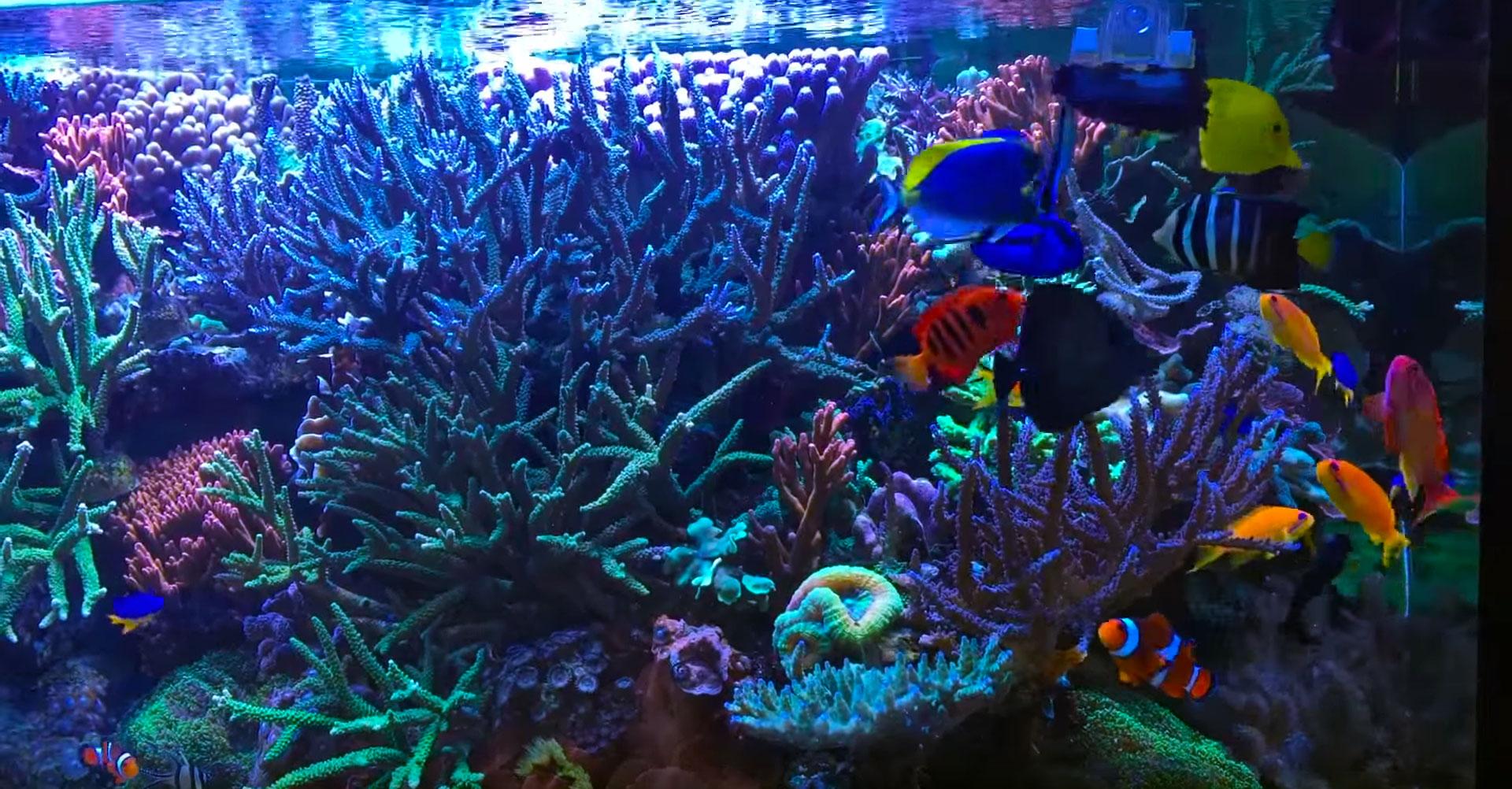 Meerwasseraquarium f ttern von getrockneten algen for Salzwasser aquarium fische