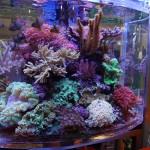 Schaubecken mit Korallen
