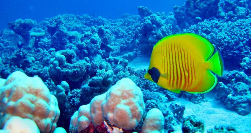 Fische Lebensraum