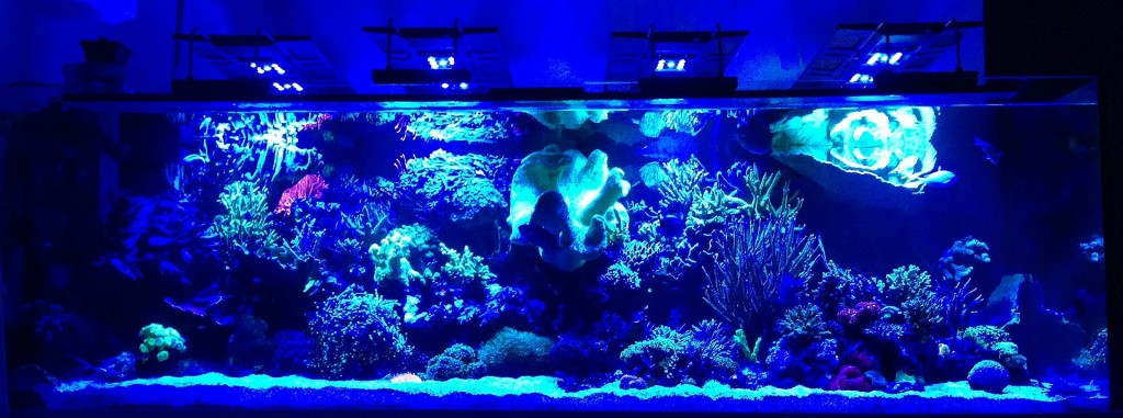Blaue LEDs Der Maxspect R420R Bei Nacht