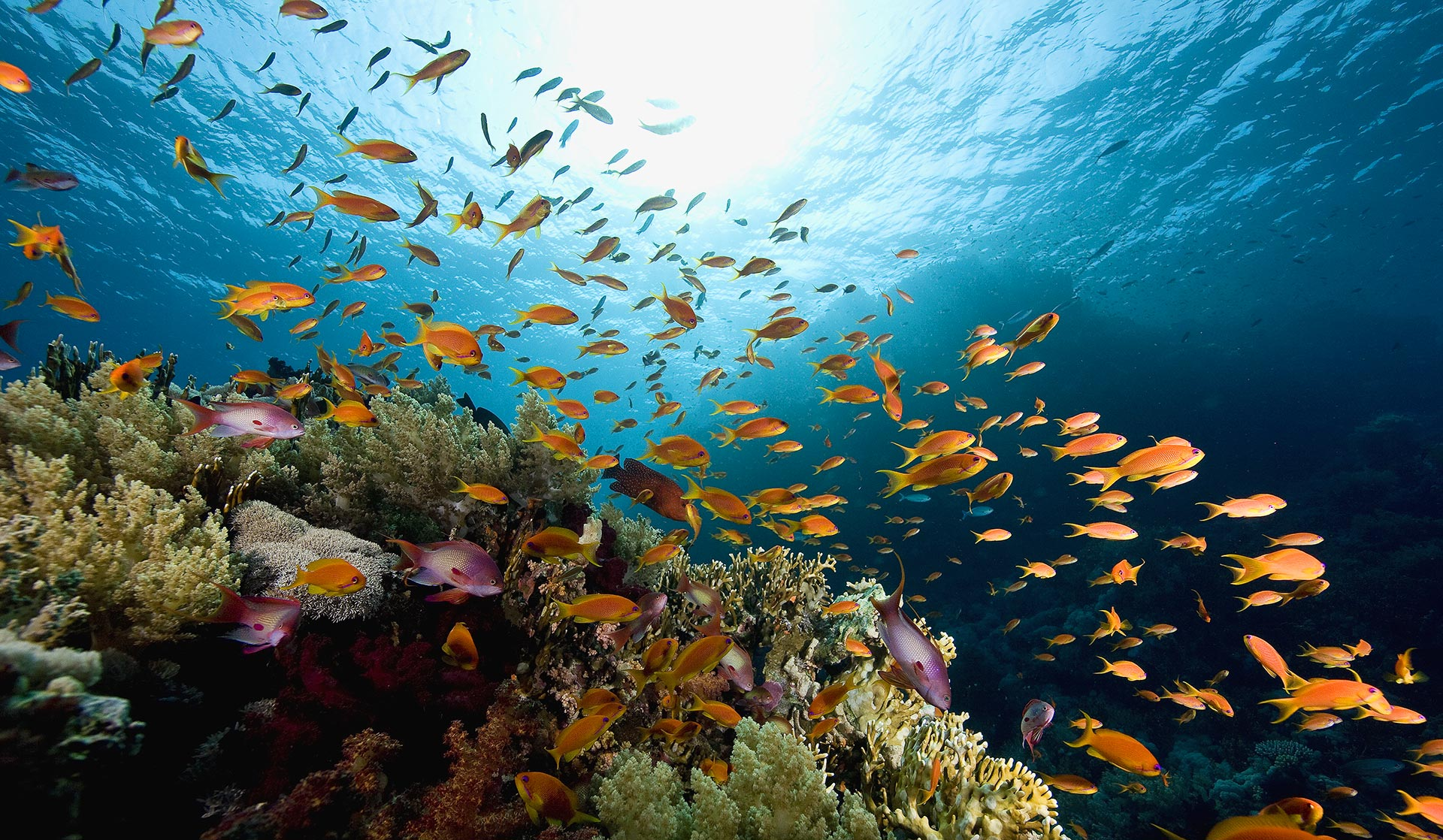Tv doku die geheime welt der ozeane for Lebensraum fische