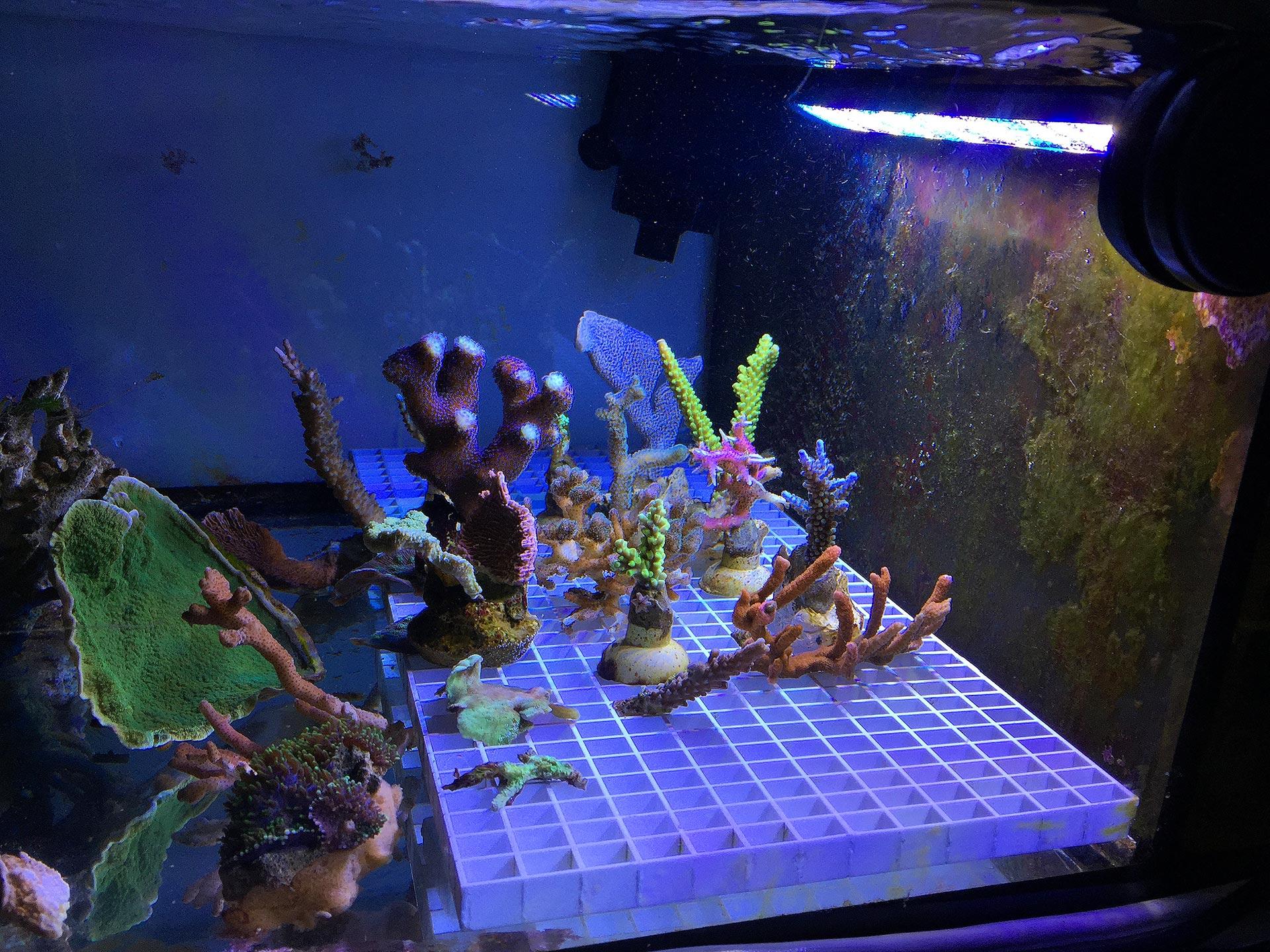 im test tunze led full spectrum 8850 korallen meer. Black Bedroom Furniture Sets. Home Design Ideas