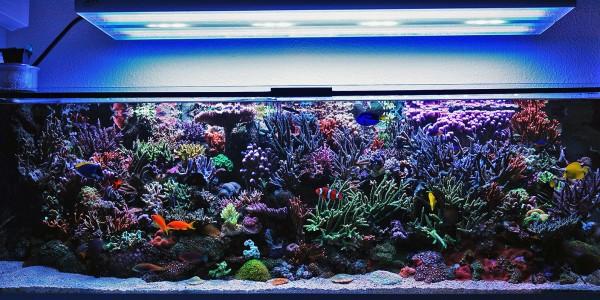 Mein Meerwasseraquarium