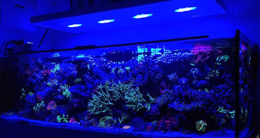 aquarium archive korallen meer. Black Bedroom Furniture Sets. Home Design Ideas