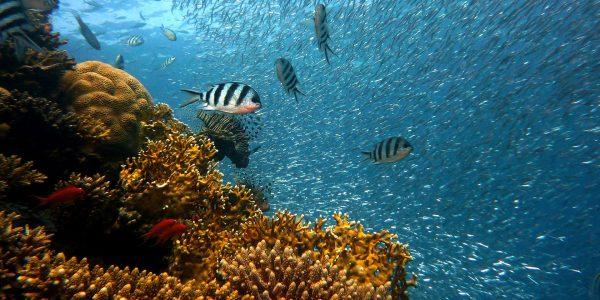 In-den-Tiefen-des-Pazifiks