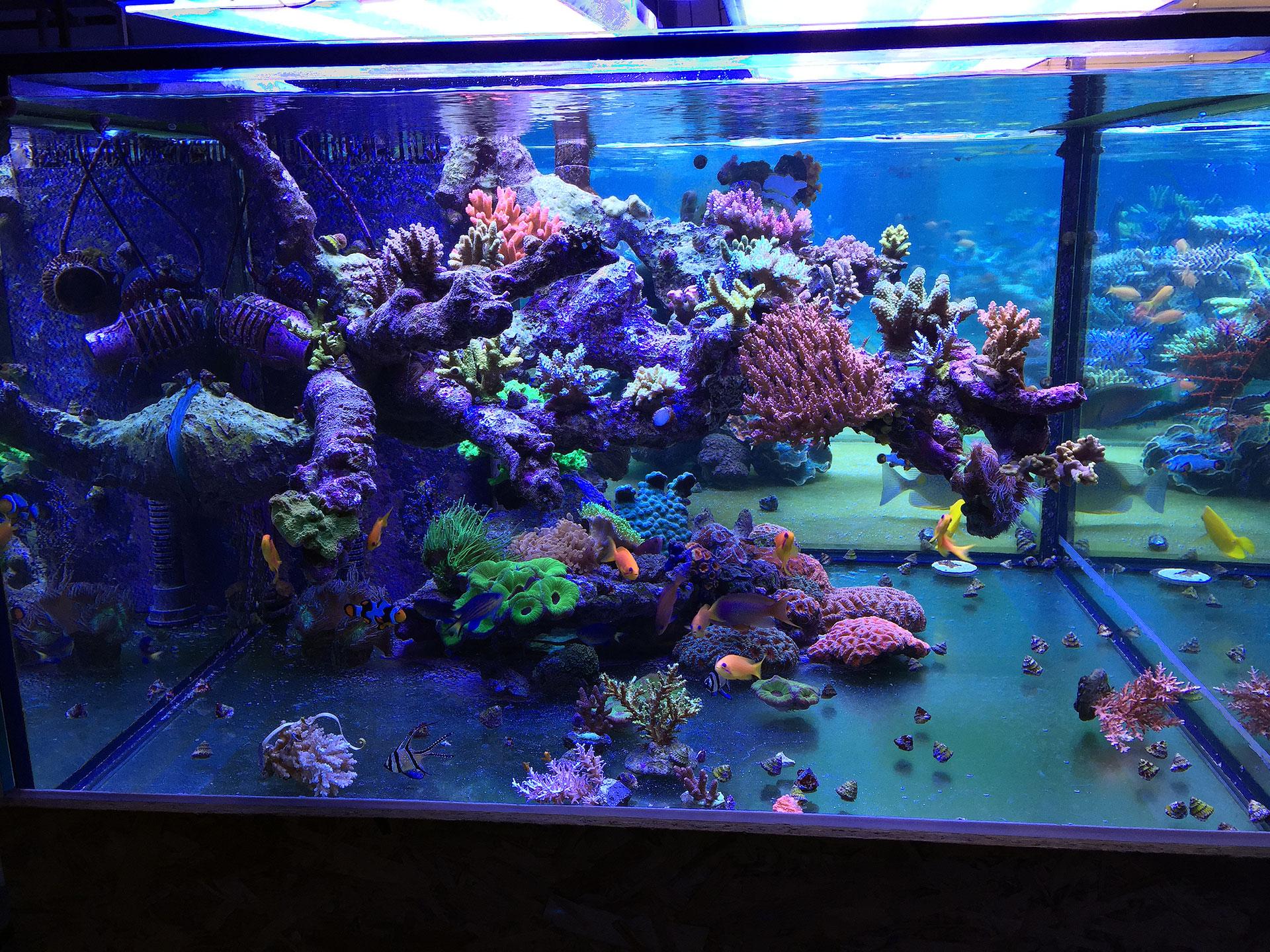 Img 5075 korallen meer for Salzwasser aquarium