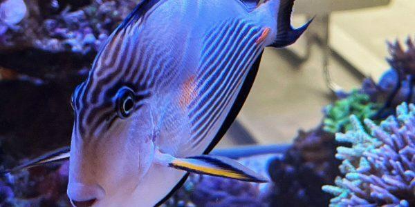Martin Kunzelnick und sein Aquarium in Deggingen